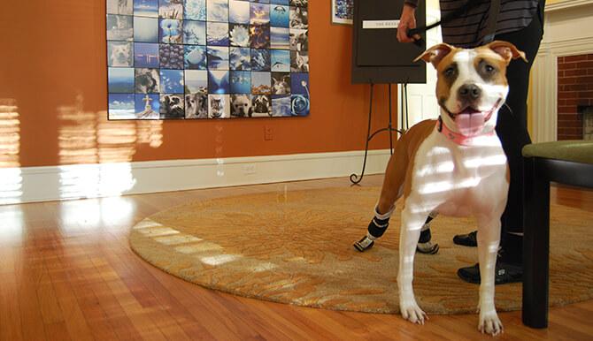 SPCA dog