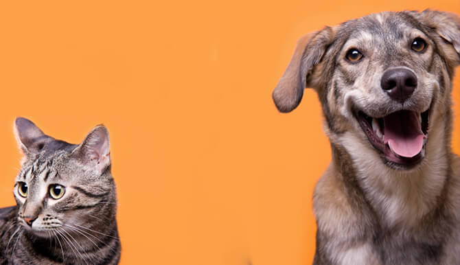 SPCA of Central Florida cat and dog