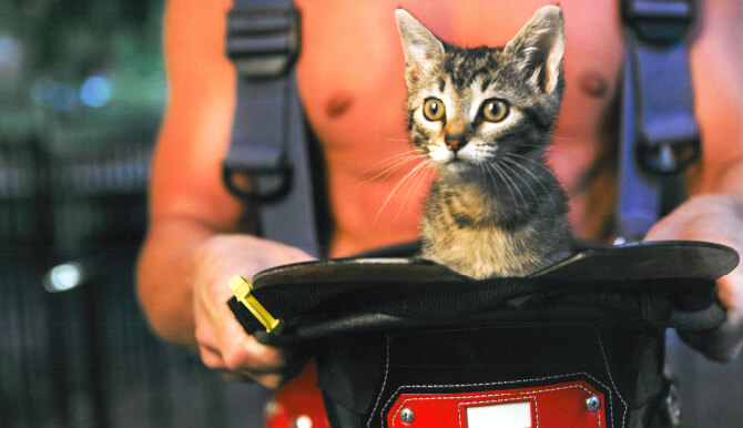 rescued pet and fireman