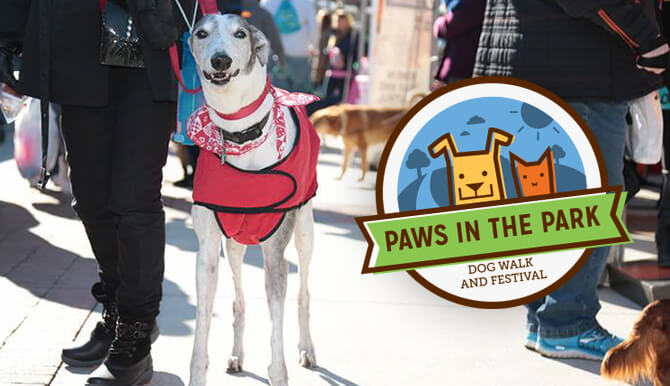 dog at Paws in the Park